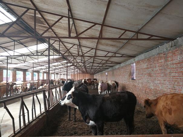隆化县肉牛产业小群体 大规模 精准扶贫纪实