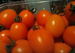 新西兰番茄大兴种植成功