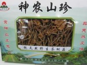 神农架极品茶树菇